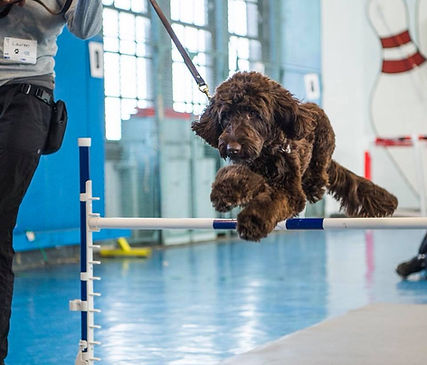 Dogist Splash jump.jpg