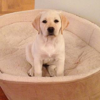 Macy as puppy.jpg