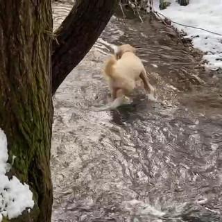 Fetch in a Cool Stream