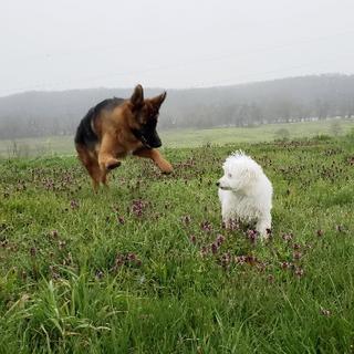 Lucy running in field.tiff