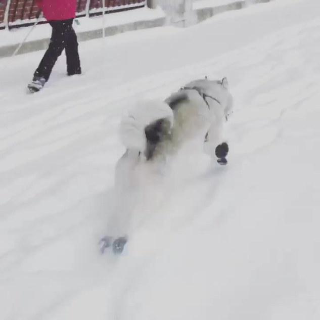 Beau in snow