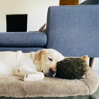Macy & Hedgehog.jpg