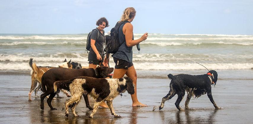 dog walking at the beach