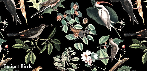 extinct-birds-print.jpg