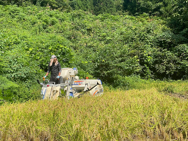 稲刈り_0912.jpg