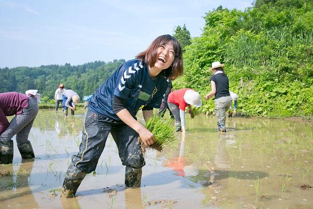 Noriko Yoneyama_taue2016_110.jpg