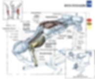 Anátomía del ejercicio, rubenentrenador.com