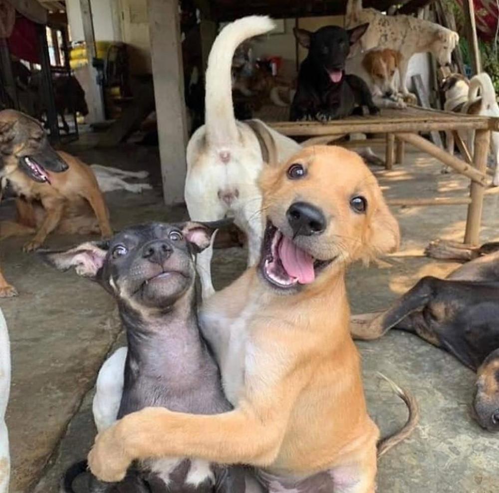 Foto: tomada de Adopción animal