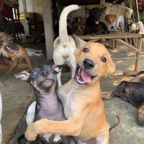 85.000 casos de abandono animal