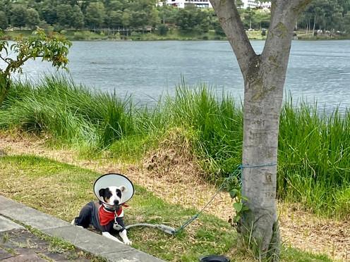 Una reflexión sobre viajes y perritos viajeros