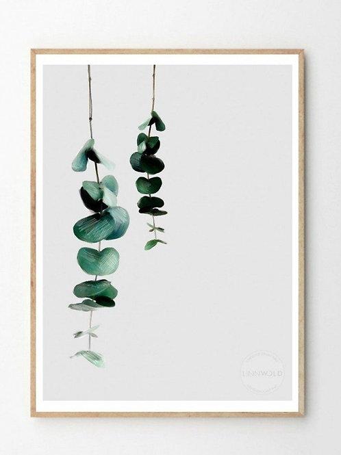 Eucalyptus 2 Print