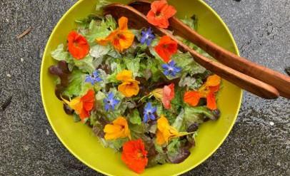 Salade eikenbladsla, dille, bloemen van oost-indische kers en komkommerkruid