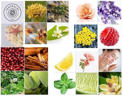 WIX ingredients naturels senteales.JPG