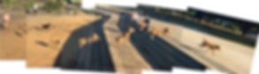 Juno-Jump.jpg
