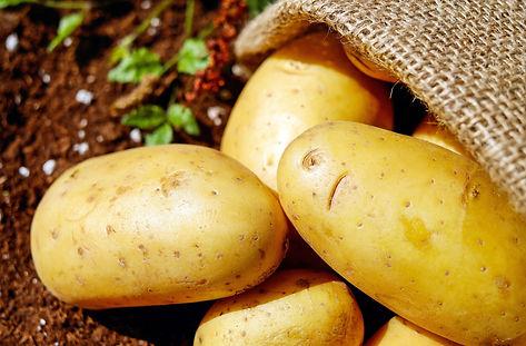 close-up-harvest-potatoes-162673.jpg
