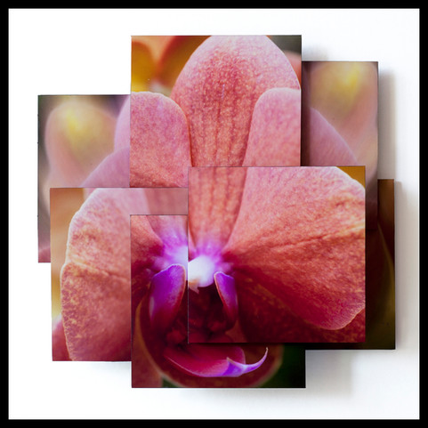 Potent Orchid.jpg
