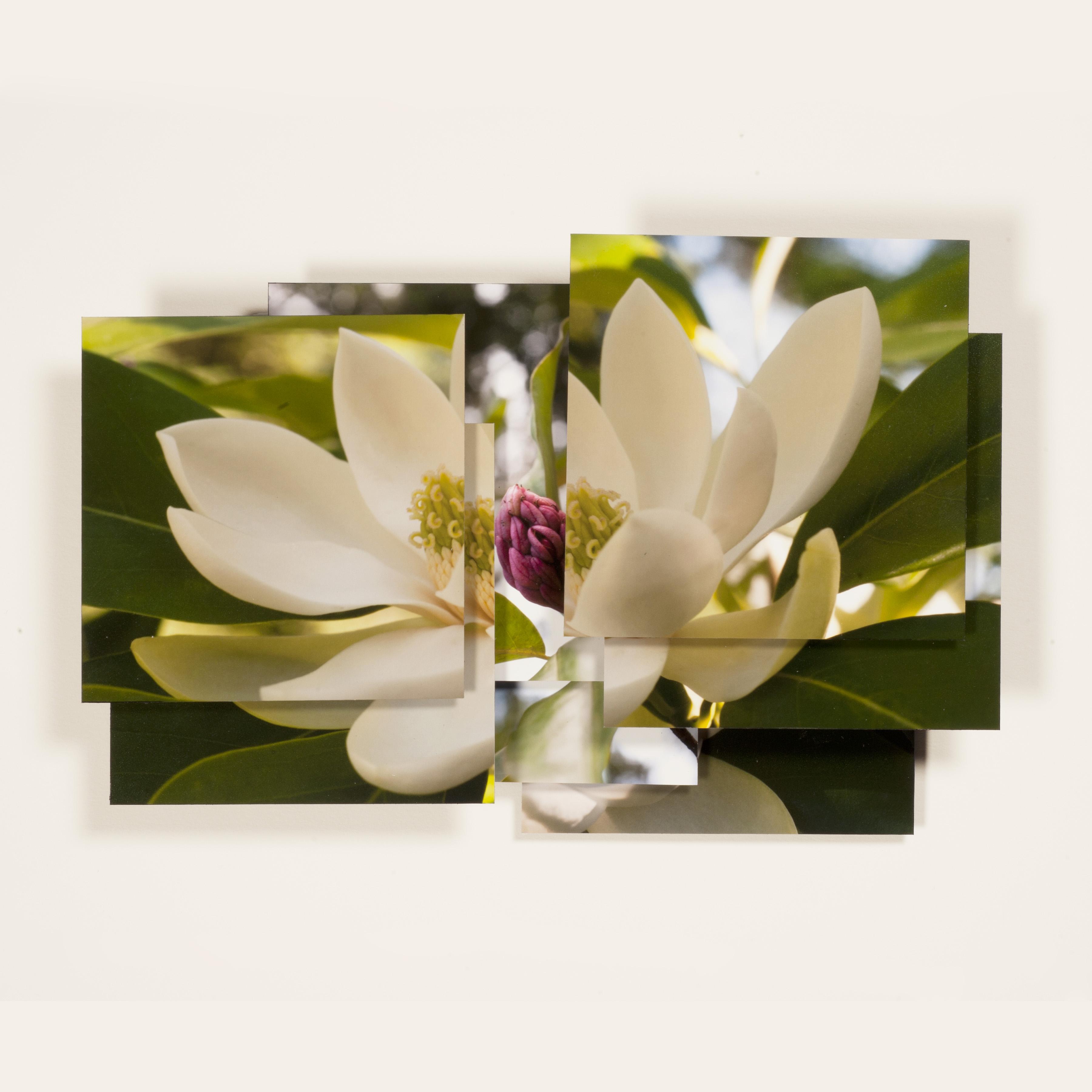 Magnolia Series - 7