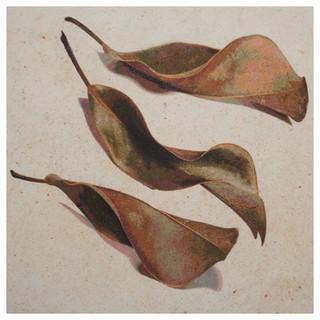 07.Three fallen magnolia leaves10X10X1