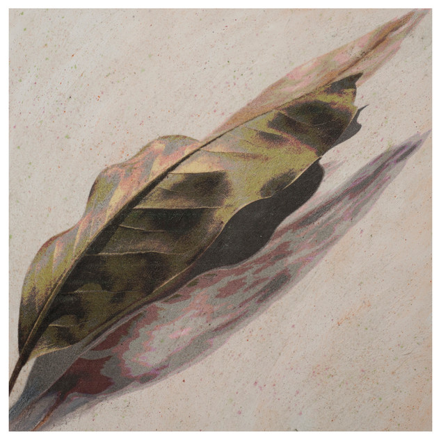 "03.	Magnolia leaf with shadow	12""X12""X2"""