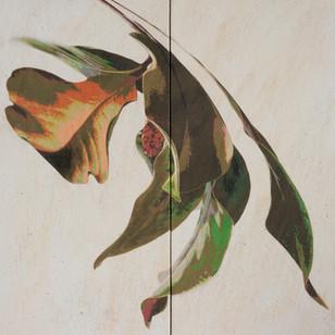 Magnolia leaves and seed pod