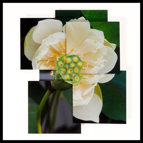 """Virtuous Lotus"""