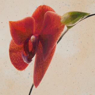 Orchid Flight 1