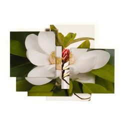 Magnolia Series -9