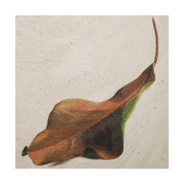 """Summer magnolia leaf-26X6X1"""""""