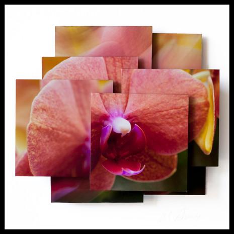 Vigorous Orchid.jpg