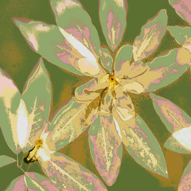 Magnolia Posterized 2