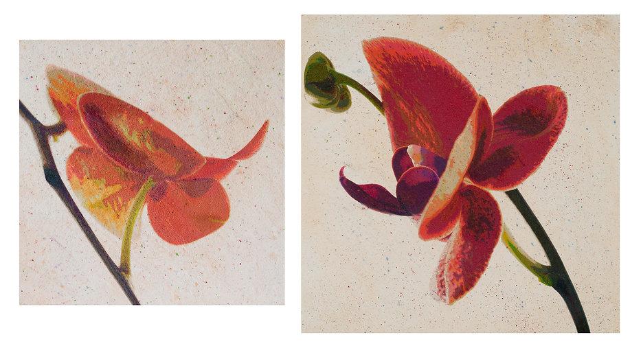 Rezny_two Orchids in Flight.jpg