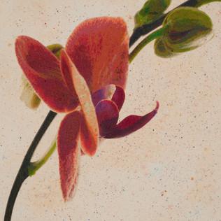 Orchid Flight 3