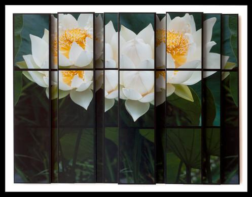 Invigorated Lotus