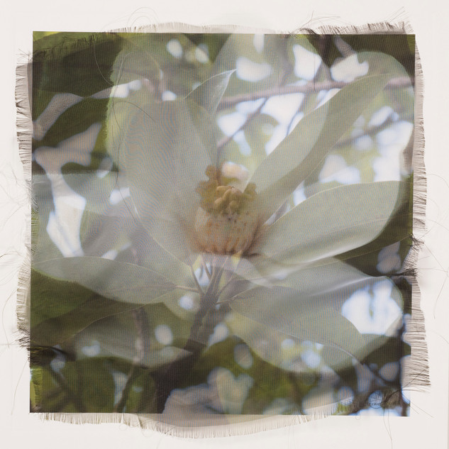 Rezny_Magnolia Blossom with green see
