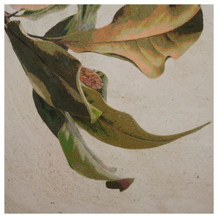 Magnolia leaves with seedpod