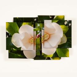 Magnolia Series -12