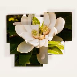 Magnolia Series -2