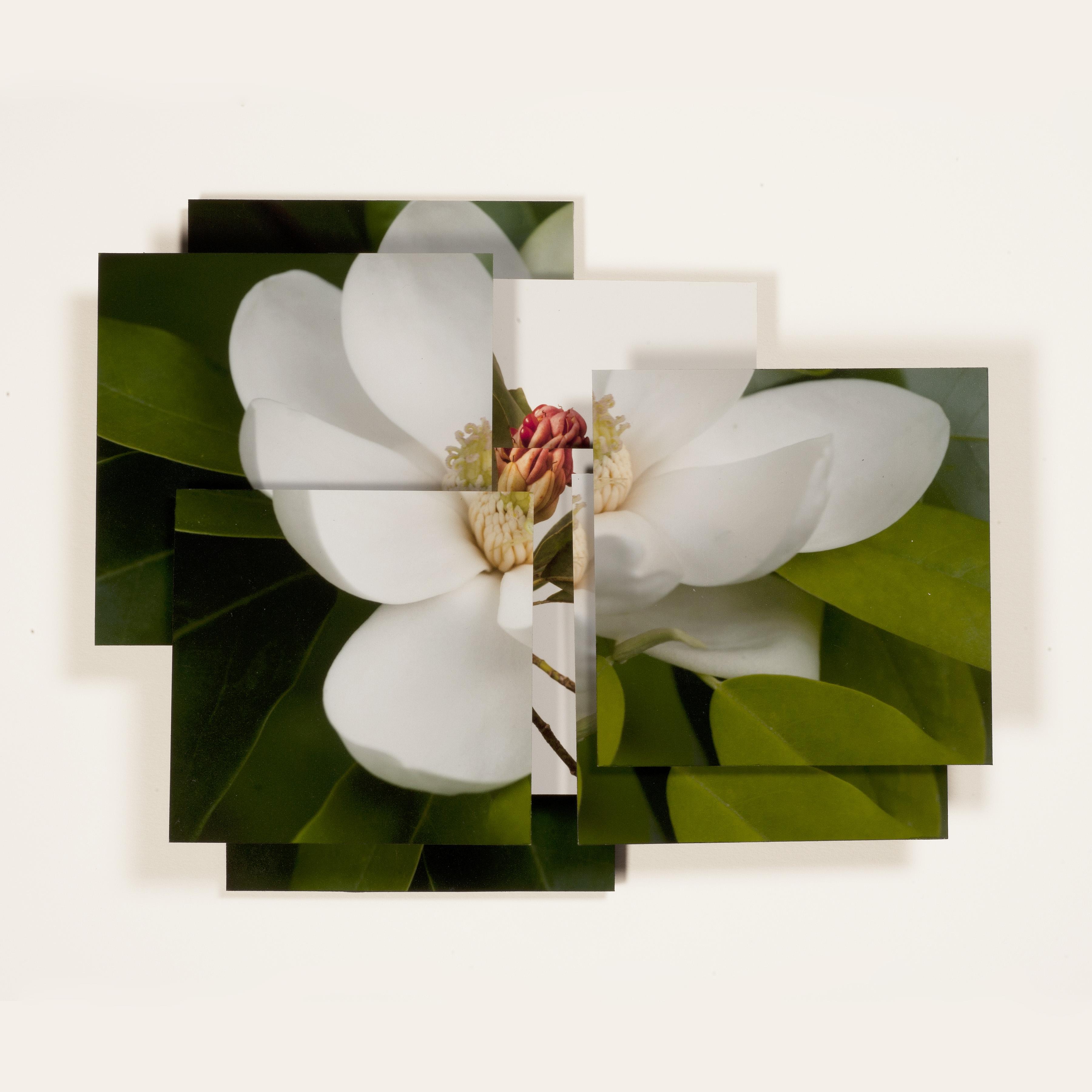 Magnolia Series -4