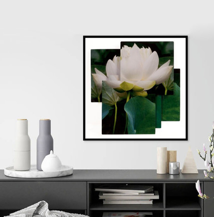 """Lotus Purity_squared""_insitu.jpg"