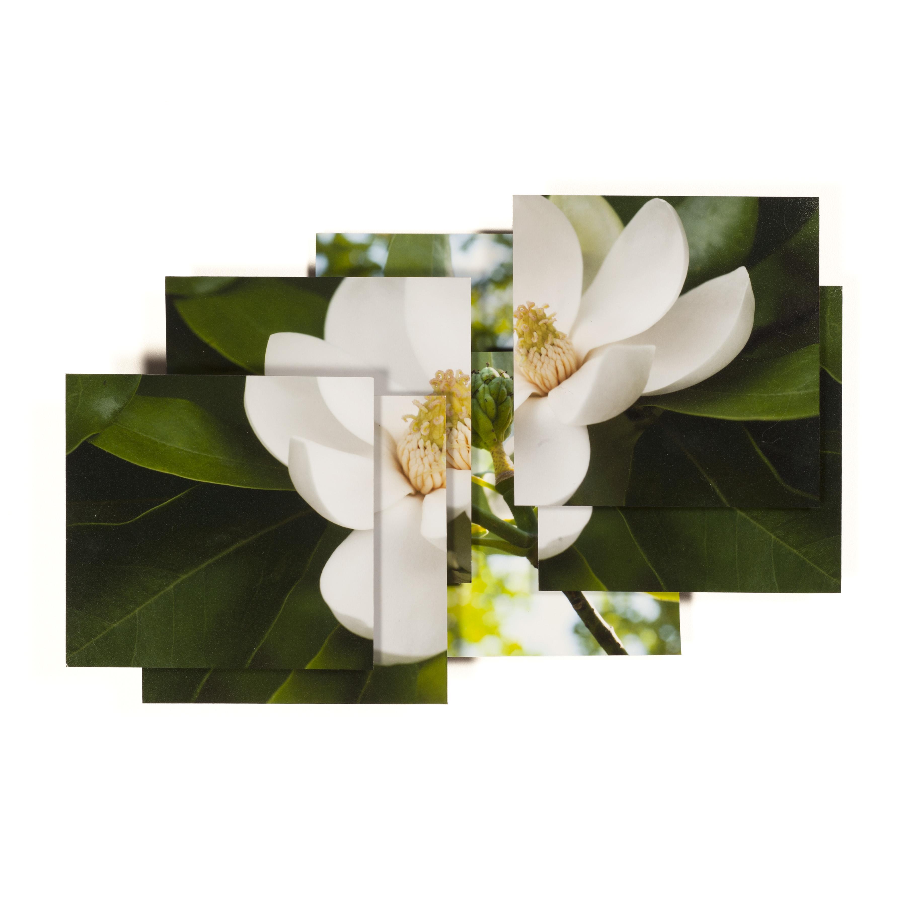 Magnolia Series -11