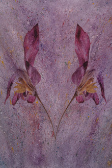 Dancing Tulips-fast step