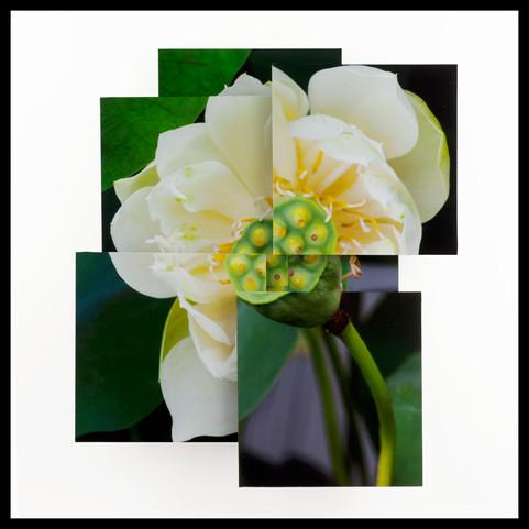 Lotus Commencment
