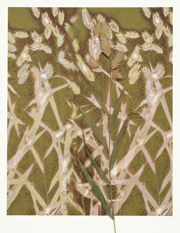 Posterized Lumen Print with organics