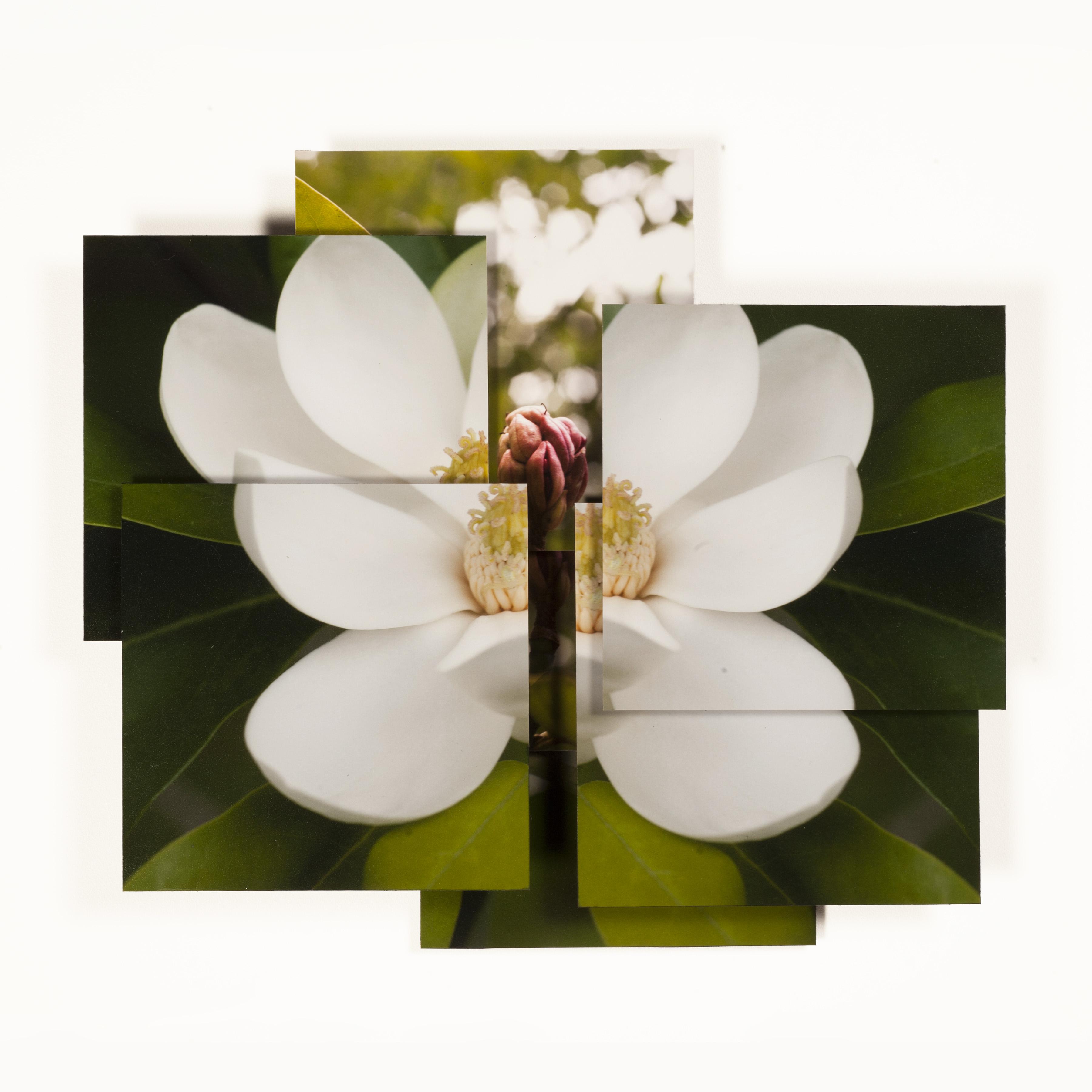 Magnolia Series -10