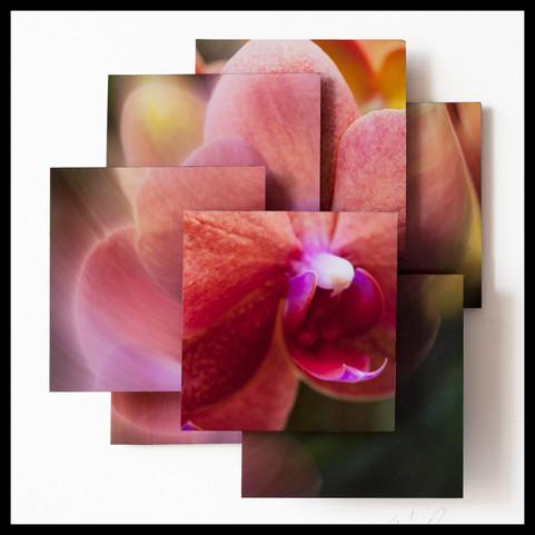 Energic Orchid.jpg