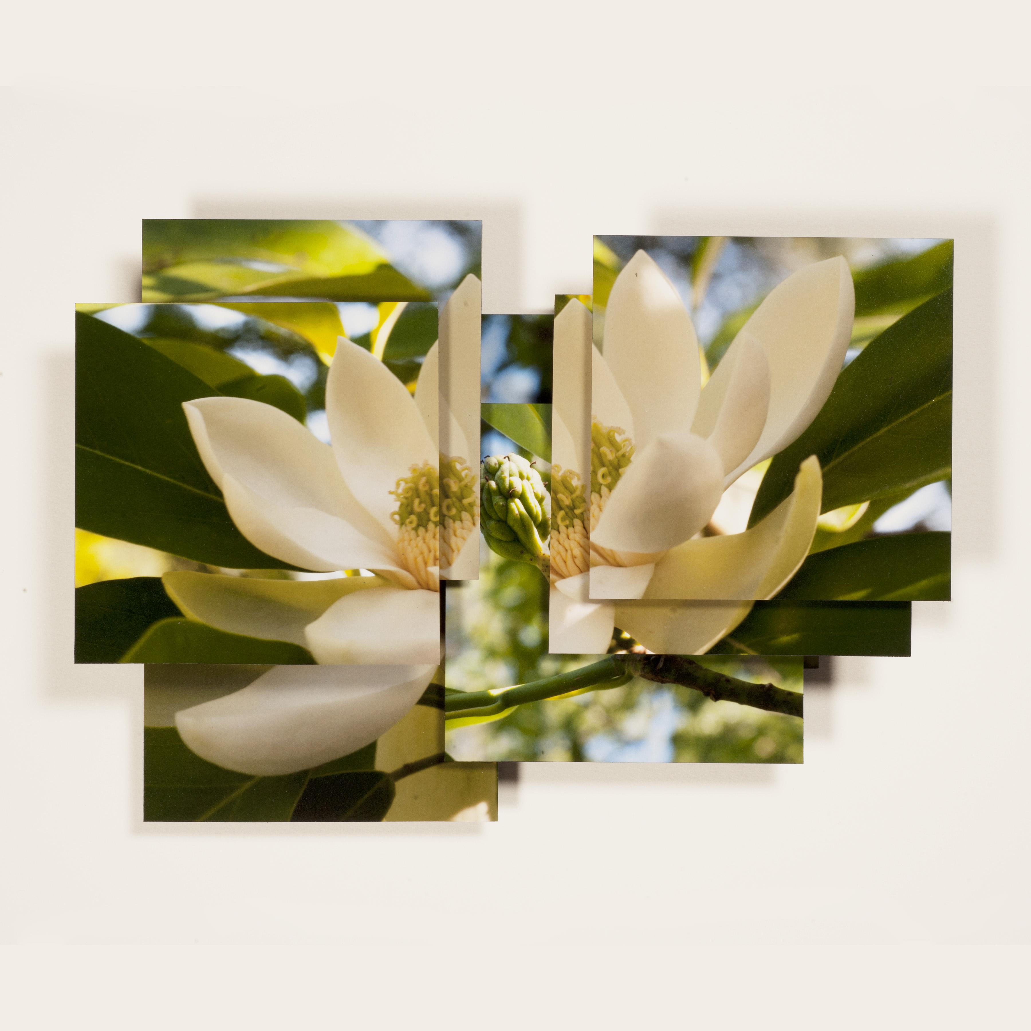 Magnolia Series -5