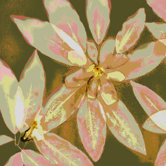 Magnolia posterized