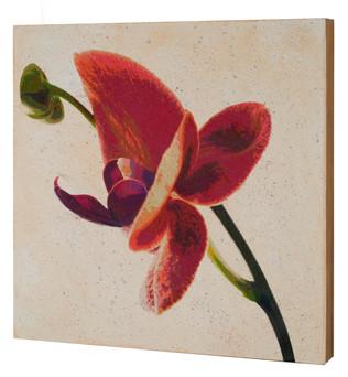Orchid Flight 5