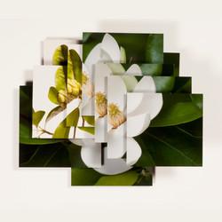 Magnolia Series -3