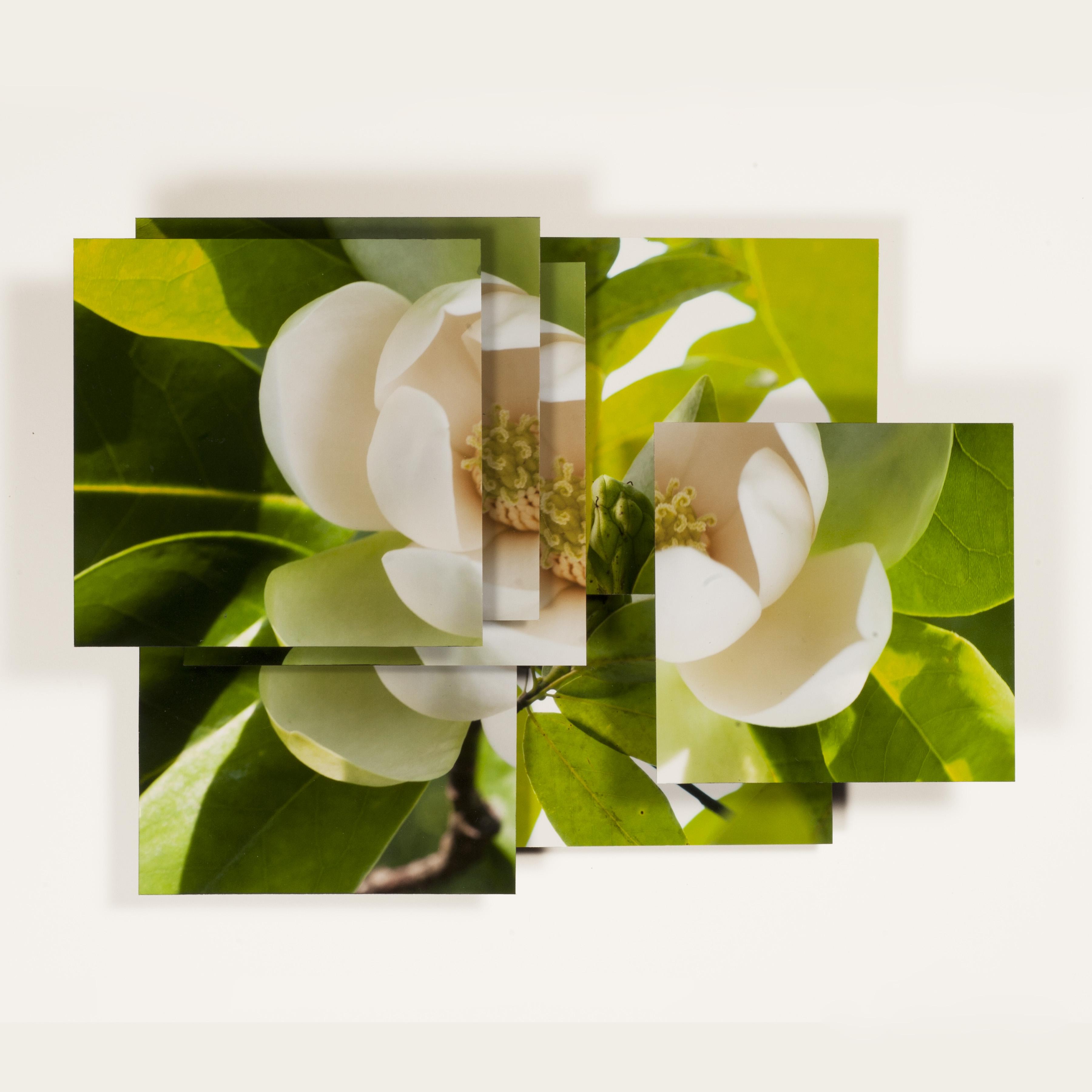 Magnolia Series -8